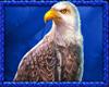Buffalo King Megaways symbol